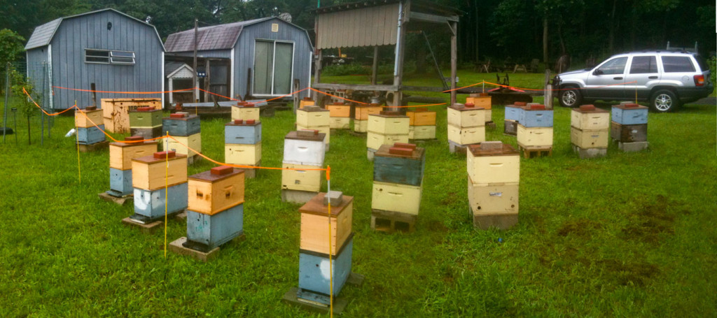 russian carniolan breeding yards e m gold beekeepers