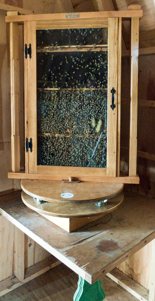 Honey Bee Observation Hive E Amp M Gold Beekeepers