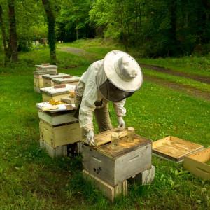 looking at honey bee splits