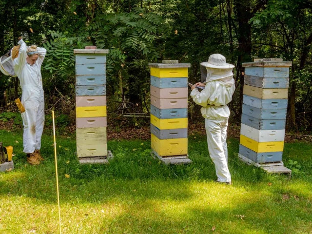 EM Gold Beekeepers Beekeeping harvesting honey Photo
