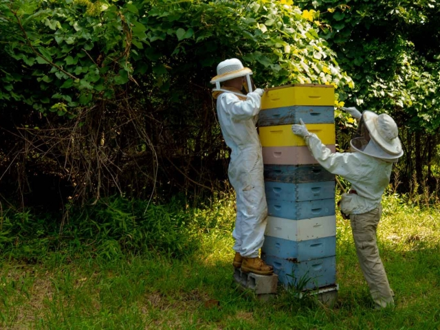 EM Gold Beekeepers Beekeeping harvesting 120 pounds Photo