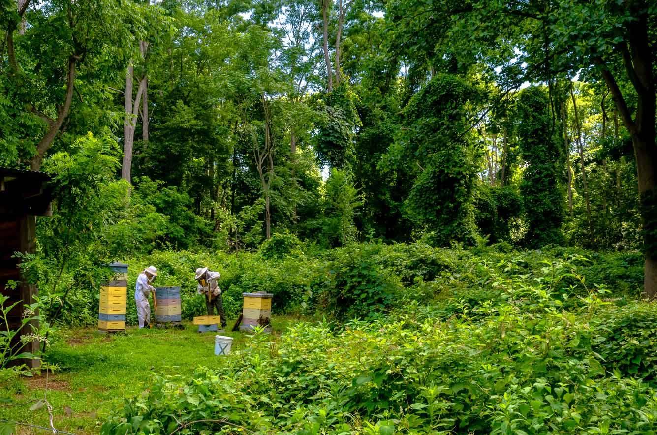 EM Gold Beekeepers Beekeeping harvesting honey Photo