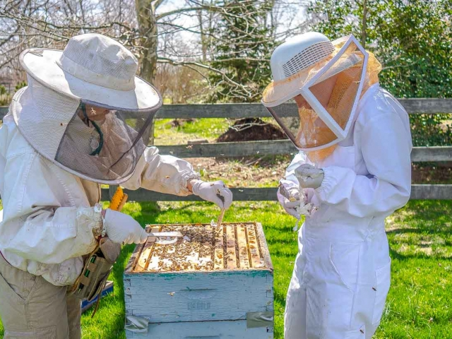 EM Gold Beekeepers Beekeeping spring inspection Photo