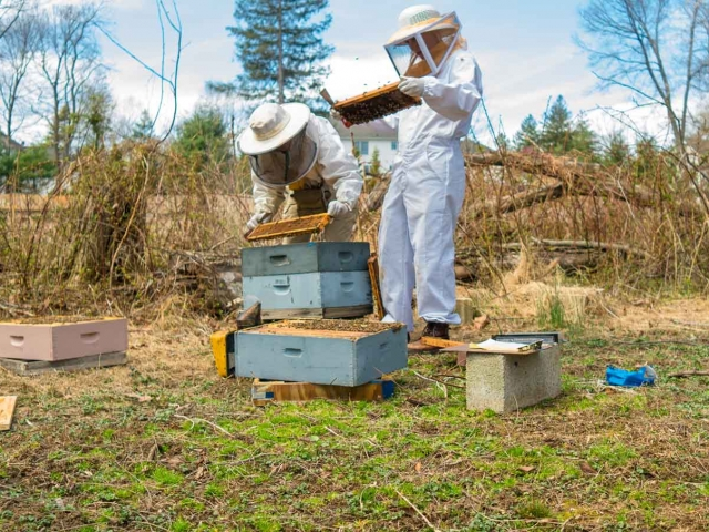 EM Gold Beekeepers Beekeeping spring hive inspection Photo