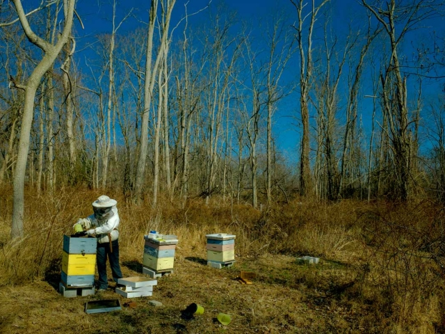 EM Gold Beekeepers Beekeeping mid winter hive inspection Photo