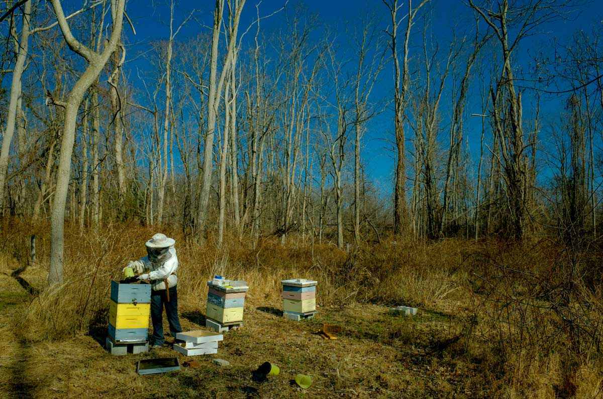 Mid winter hive inspection