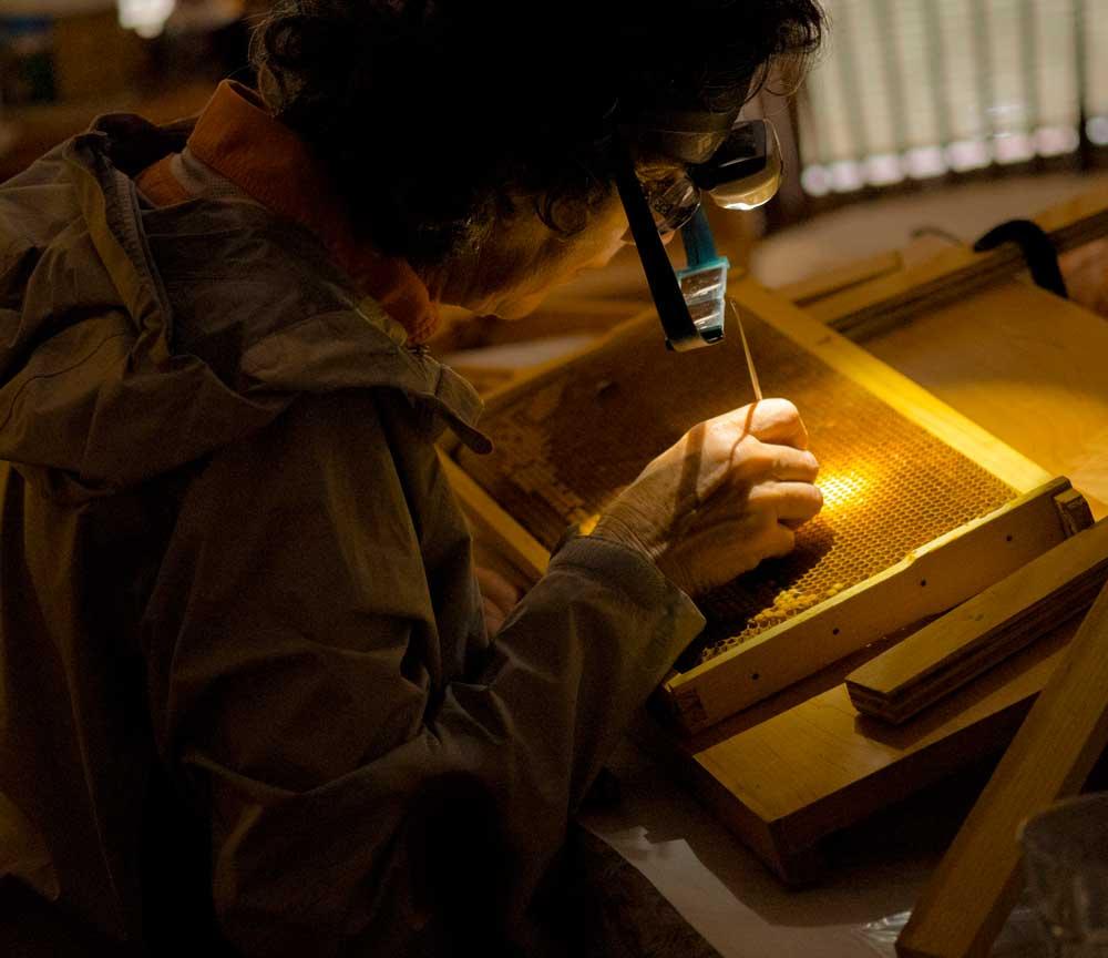 Mary grafting 2016 NJ Honeybee Queens