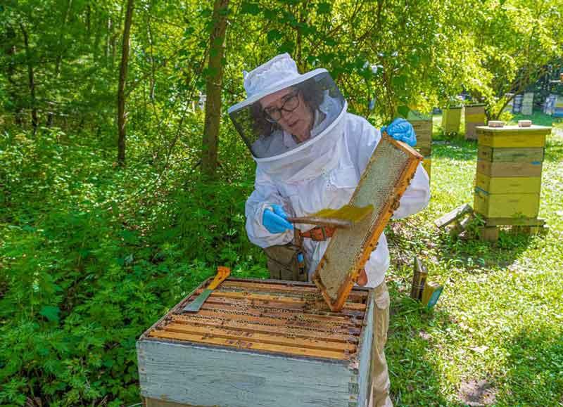 Harvesting our NJ Honey