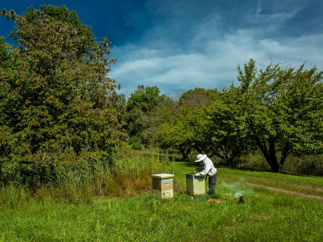 EM Gold Beekeepers Beekeeping inspecting hive photo