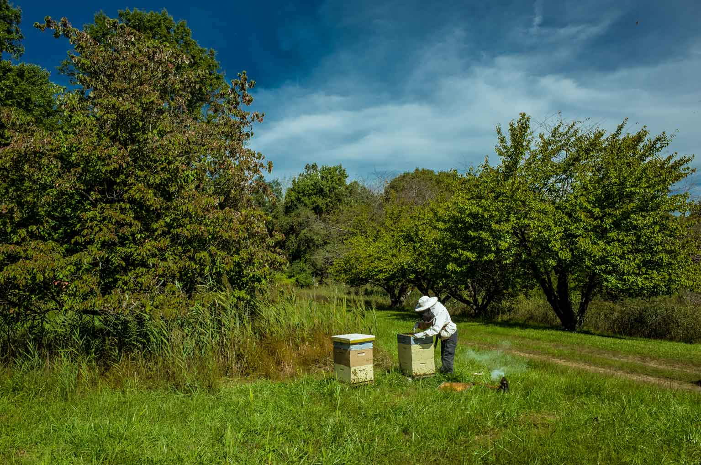 EM Gold Beekeepers Beekeeping inspecting hive photo