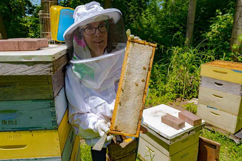 Holding a newly pulled frame of NJ Honey