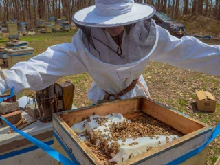 This Honey Bee hive's 1st Spring inspection