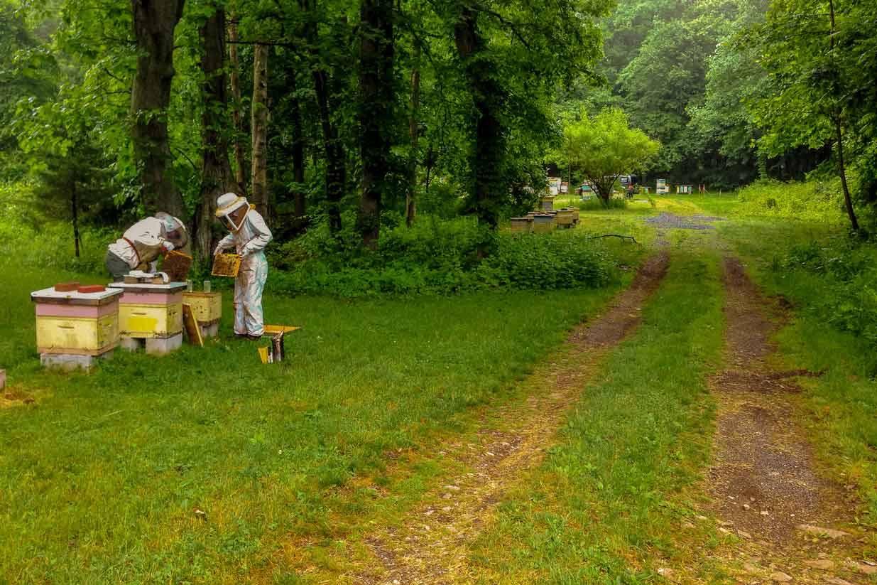 EM Gold Beekeepers Beekeeping checking splits Photo