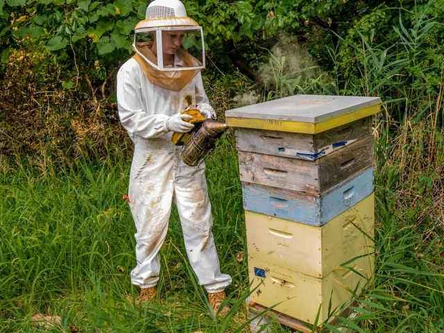 EM Gold Beekeepers Beekeeping smoking a hive Photo