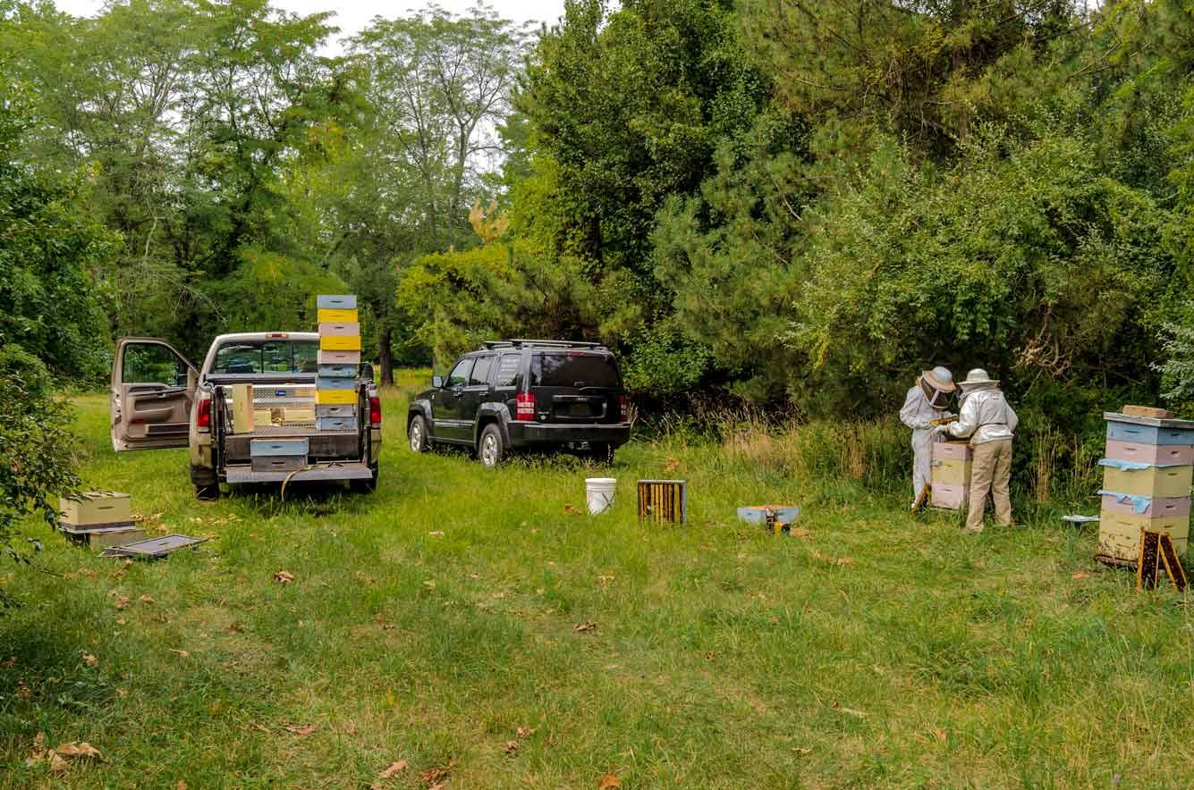 EM Gold Beekeepers Beekeeping inspecting an out yard Photo