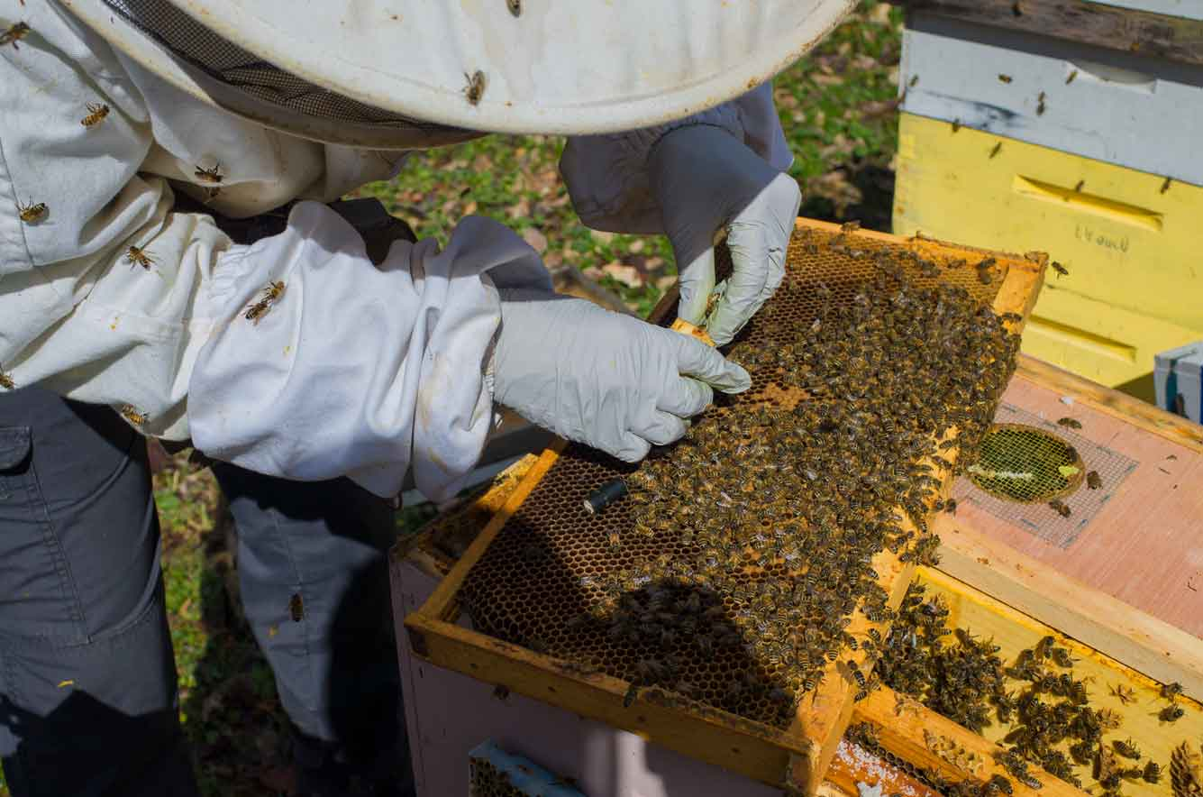 EM Gold Beekeepers Beekeeping caging a queen Photo
