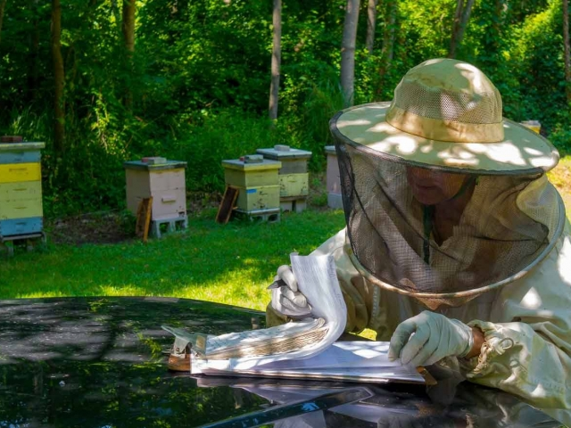 EM Gold Beekeepers Beekeeping updating queen rearing notes Photo